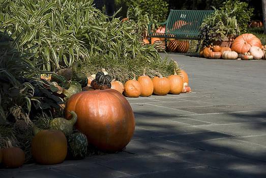 Pumpkin Patch by Cindy Rubin