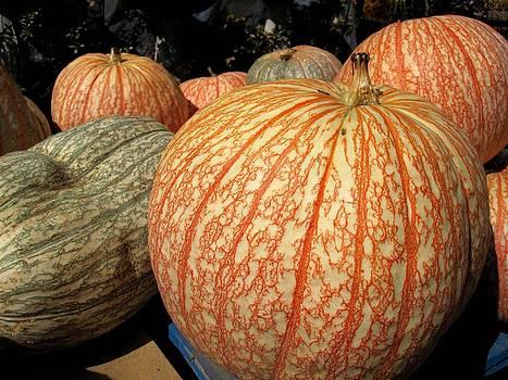 Pumpkin Patch by Rosie Brown