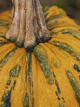 Pumpkin by Patricia McKay
