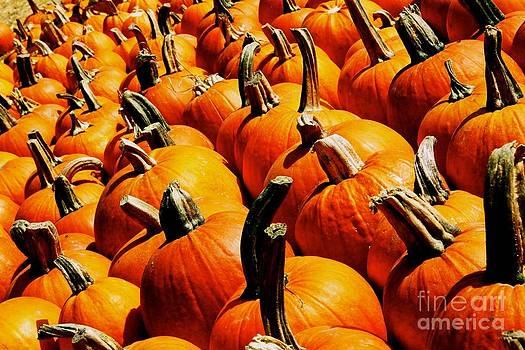 Pumpkin Plethora by Matthew Keoki Miller
