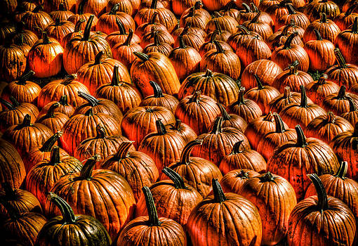 Pumpkins 2 by Shawn Wood
