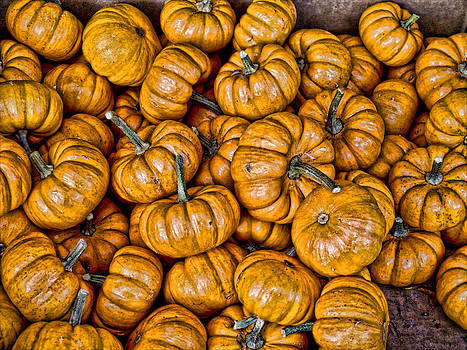 Pumpkins by Bennie Reynolds