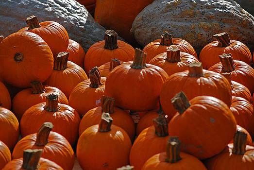 Michelle Cruz - Pumpkins