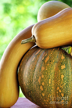 Pumpkins on green background. by Inacio Pires