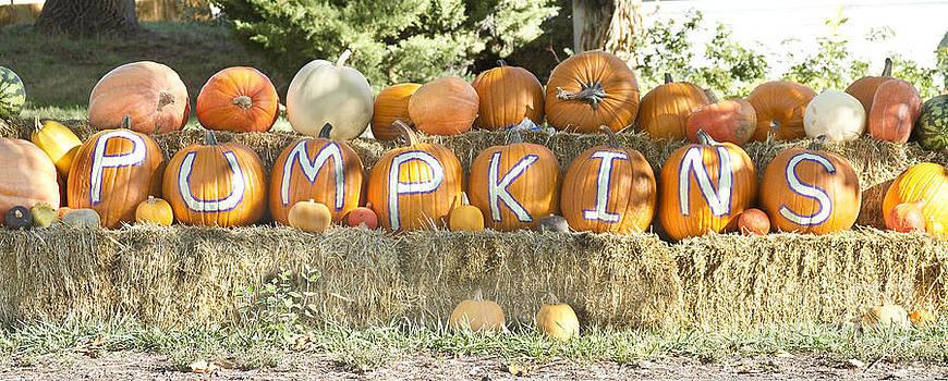 James BO  Insogna - Pumpkins P U M P K I N S