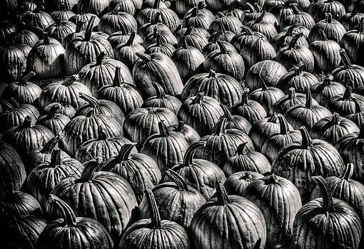 Pumpkins by Shawn Wood