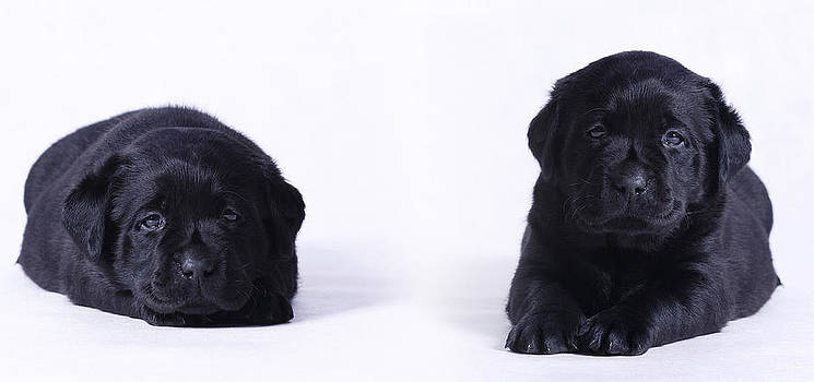 Waldek Dabrowski - Puppies