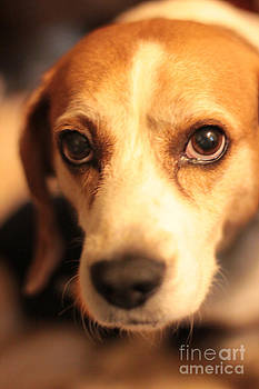 Puppy Dog Eyes by NaDean Ribitzki