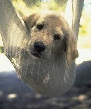 Don Kreuter - Puppy Hanging Out in the Hammock