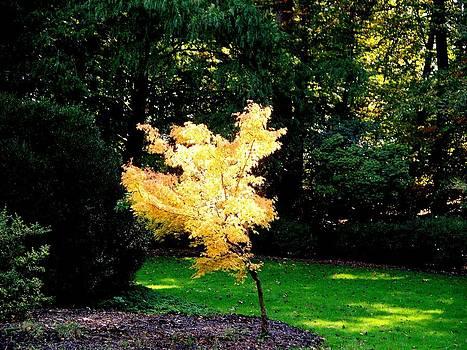 Rick Todaro - Pure Gold