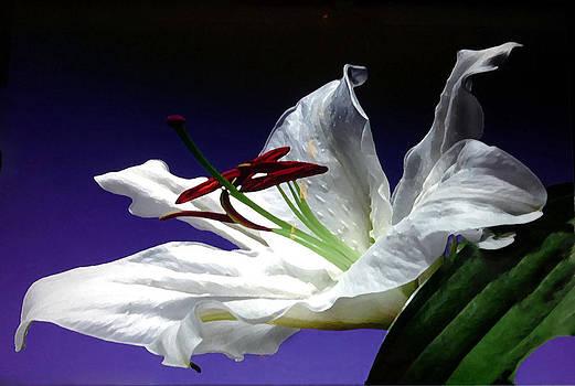 Pure White by Anke Wheeler