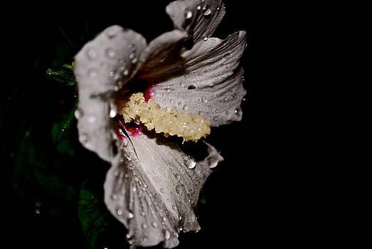 Purety by Gloria Warren