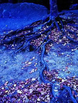 Purgatory's Tree  by Allison Emmi