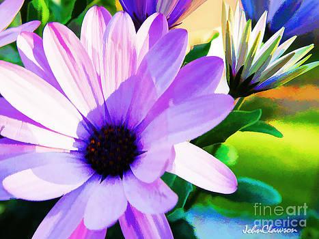 Purple African Daisy by John Clawson