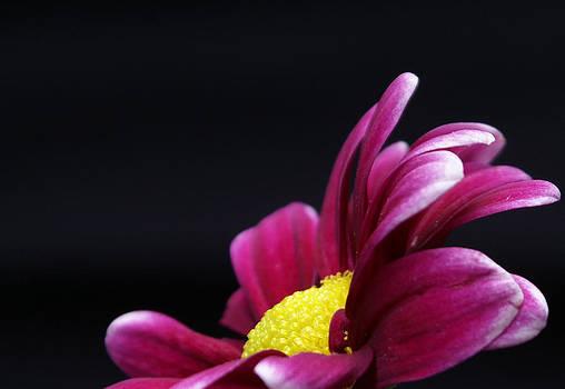 Purple and Yellow Beauty by Karen Puckett