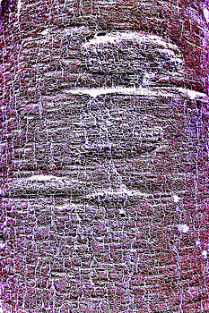 Roy Foos - Purple Aspen
