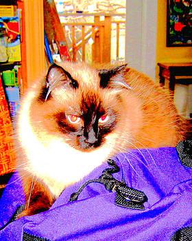 Marty Grossman - Purple Bag