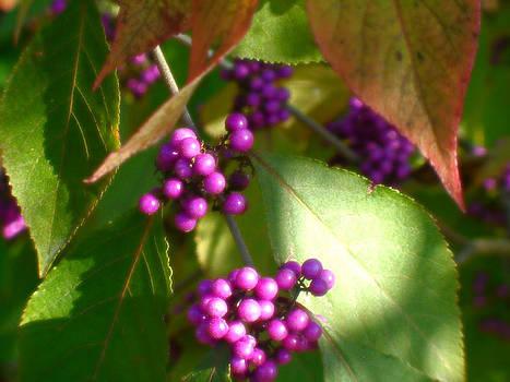 Purple Beads by Lee Yang