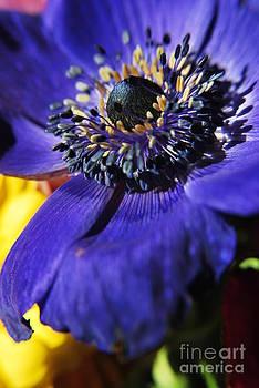 Yhun Suarez - Purple Bulb