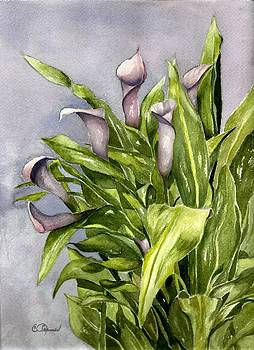 Purple Callas by Constance Larimer