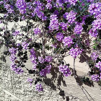 Dawn Marie Black - Purple Cascade