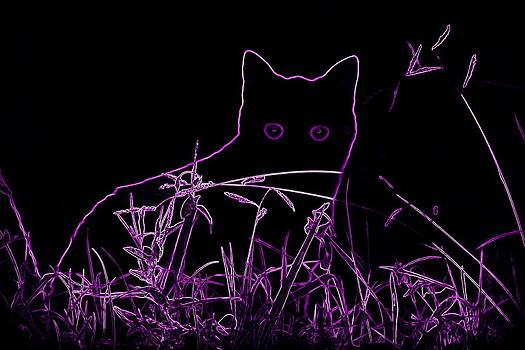 Purple cat by Rosa Shannon
