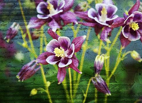 Purple Columbine's  by Cathie Tyler