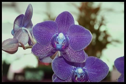 Purple Delight by Sharon Spade - Kingsbury
