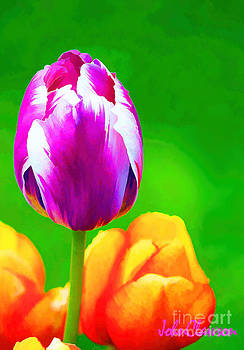 Purple Flame by John Clawson