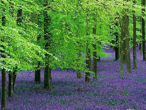 Purple Flower Carpet For Green Trees by ilendra Vyas