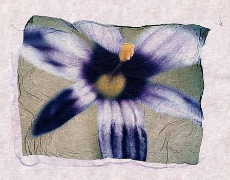 Purple Flower by Gwen Strahan