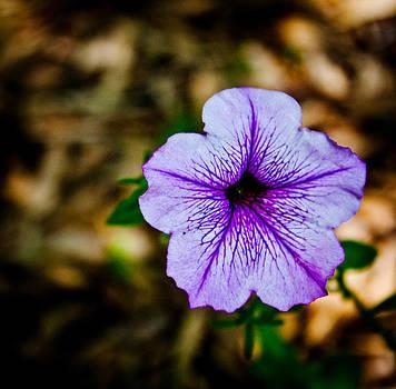 Purple Flower by Kevin Lubin