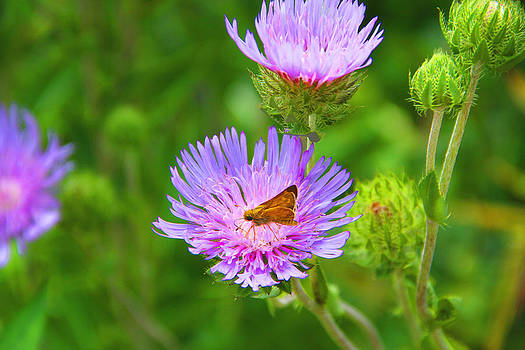 Purple Flower by Troy  Skebo