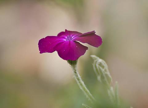 Purple flower by Yuri Santin