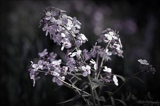 Purple Flowers by Alivia Houdek