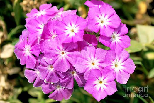 Purple Friends Flower by Denis Shah