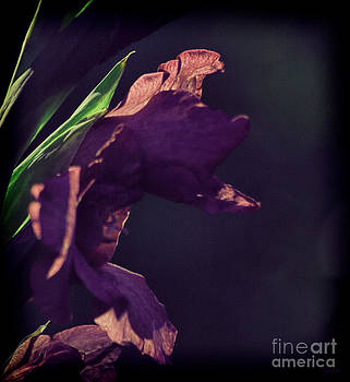 Purple Gladiolus by Jeff Breiman
