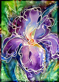Purple Iris by M C Sturman