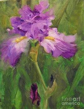 Purple Iris by Margaret Aycock