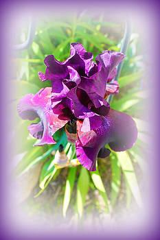 Rebecca Frank - Purple Iris