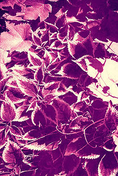 Purple Leaves by Angela Bruno