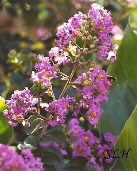 Lee Hartsell - Purple