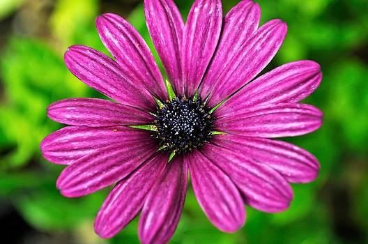 Purple Love by Jose Diogo