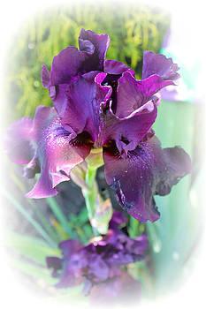 Rebecca Frank - Purple Love