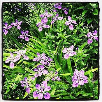 Purple by Michelle White