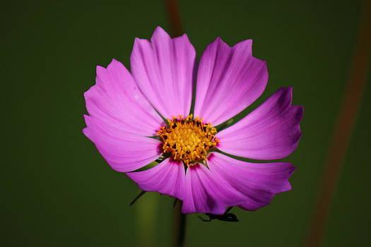 Purple Nurple by Mike Wilber