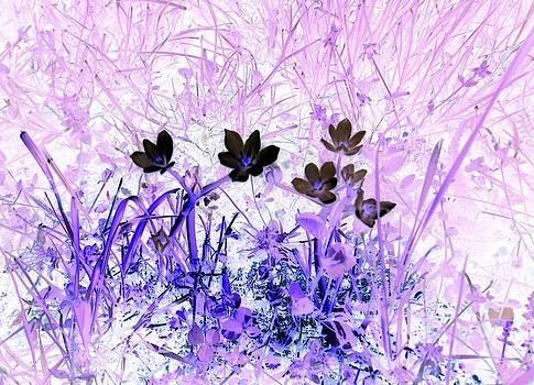 Purple one by Nikoleta Jurcinova