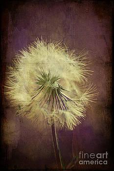 Purple Passion by Joan McCool