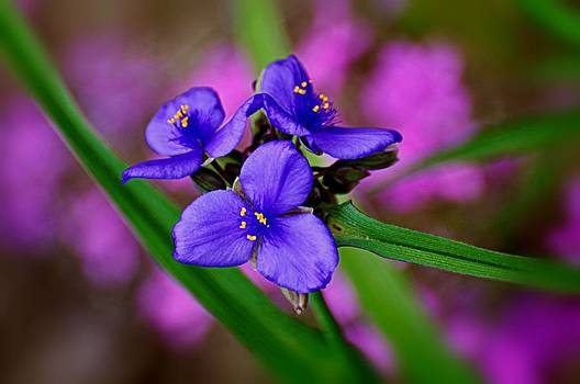 Marty Koch - Purple Passion