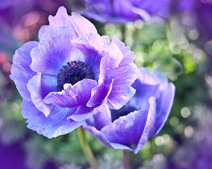 Purple Poppies by Beverly Hanson